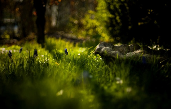 Picture greens, flower, grass, the sun, macro, trees, flowers, nature, background, widescreen, Wallpaper, blur, day, wallpaper, …