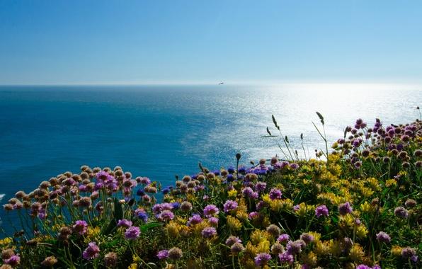 Picture sea, flowers, coast, England, England, Wales, Wales, The Irish sea, Irish Sea, Puffin Island
