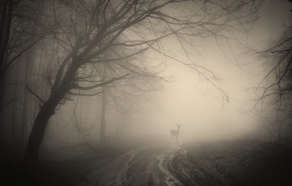 Picture forest, trees, landscape, nature, forest, deer, misty, trees, landscape, nature, deer, creepy, creepy, misty