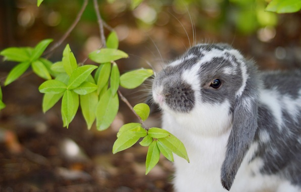 Picture branch, rabbit, leaves