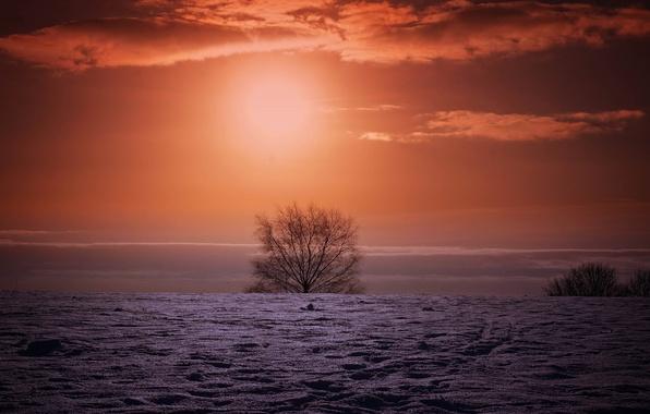 Picture winter, field, night