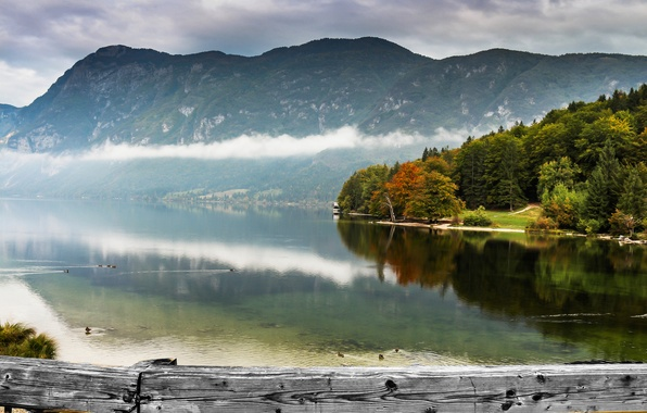 Picture forest, mountains, fog, lake, duck