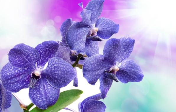 Picture flowers, Orchid, flowers