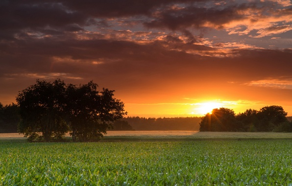 Picture field, landscape, sunset, tree