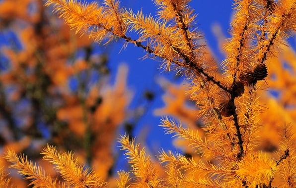 Picture autumn, forest, the sky, needles, branch, bumps