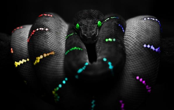 Picture Snake, Color, Snake Colours, Snake