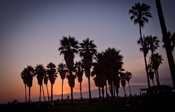 Picture summer, california, sunset, usa, los angeles, palm, vennice beach