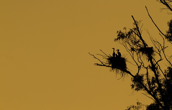 Picture birds, tree, silhouette, socket