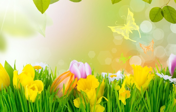 Picture grass, flowers, spring, tulips