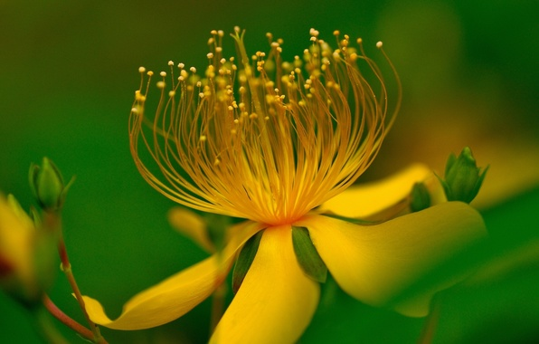 Picture flower, leaves, macro, yellow, green background