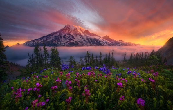 Picture snow, flowers, nature, dawn, mountain, valley
