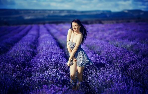 Picture field, girl, flowers, neckline, legs, lavender, Katrina Blue