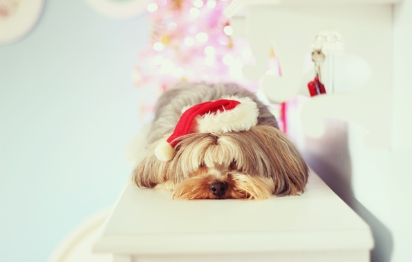 Picture background, holiday, Wallpaper, mood, hat, new year, dog, christmas, new year, dog, wallpapers, Novogodniy