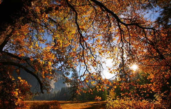 Picture autumn, leaves, the sun, branches, tree, Nature
