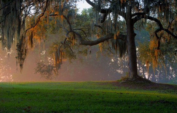 Picture forest, grass, light, trees, branches, fog, glade