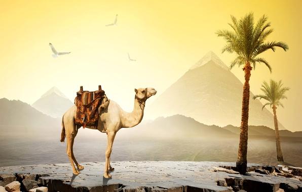 Picture the sky, the sun, birds, stones, palm trees, desert, camel, Egypt, pyramid, Cairo