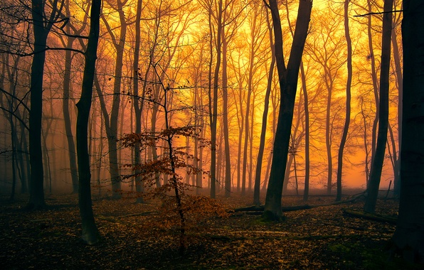 Picture autumn, forest, trees, fog, the evening, glow