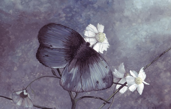 Picture butterfly, figure, color, chamomile, blue