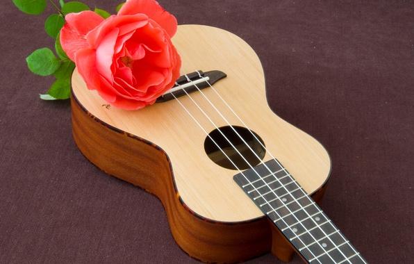 Picture rose, guitar, red, Rose, Guitar