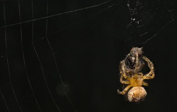 Picture the victim, web, Spider