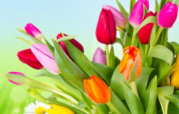 Picture flowers, bright, beauty, petals, tulips, red, red, pink, orange, colorful, yellow, pink, yellow, flowers, beauty, …