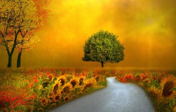 Picture road, landscape, style