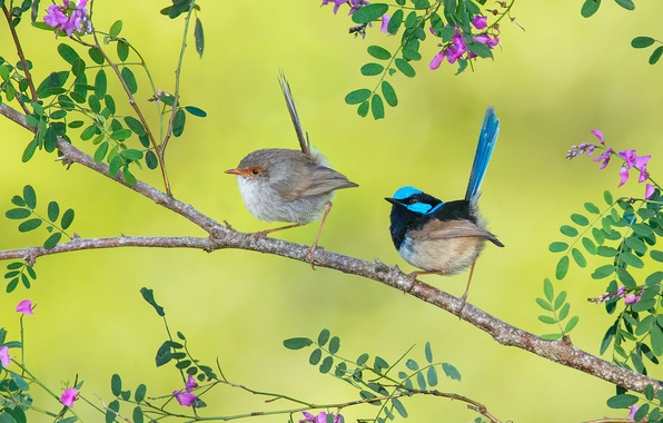 Picture leaves, flowers, birds, paint, branch, feathers, tail, Wren
