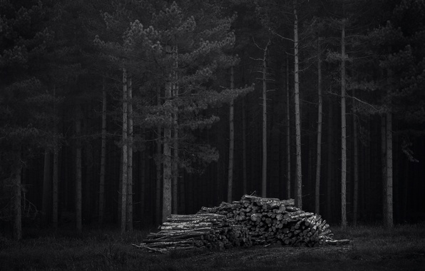 Picture forest, trees, night, dark, wood