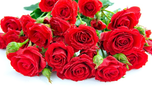 Picture drops, flowers, roses, bouquet, petals, red, white background
