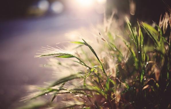 Picture grass, light, street