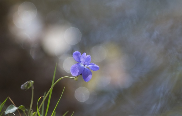 Picture flower, glare, background, blue, grass