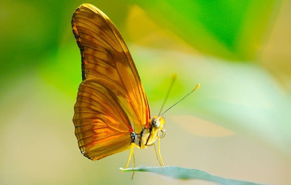Picture the sun, macro, sheet, butterfly, wings, insect, proboscis
