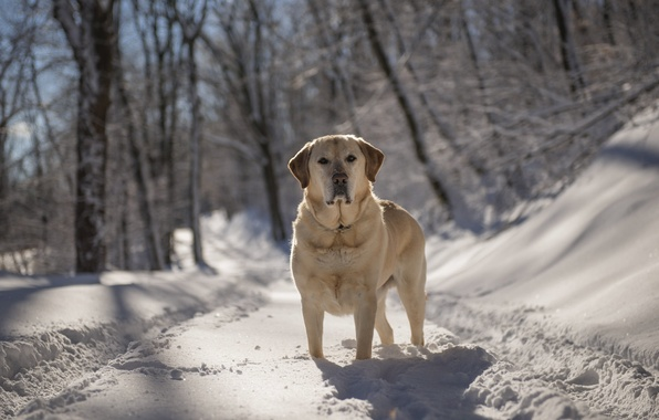 Picture winter, look, each, dog