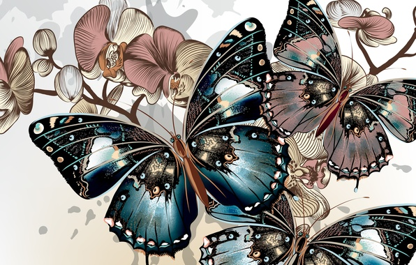 Picture color, butterfly, background, wings, vector, color