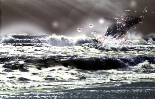 Picture sea, animals, energy, freedom, rays, circles, squirt, storm, character, nature, Dolphin