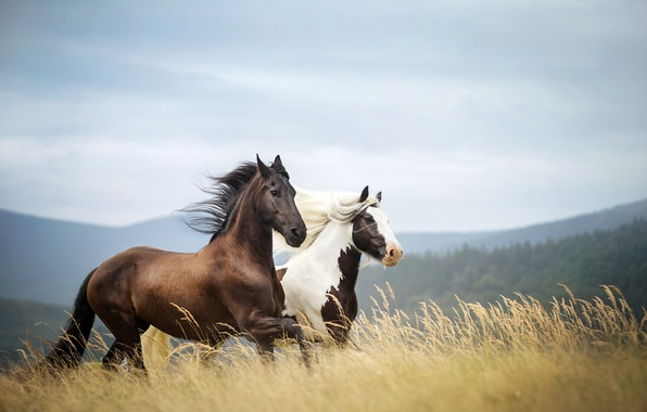 Picture field, grass, clouds, trees, mountains, the wind, stems, horse