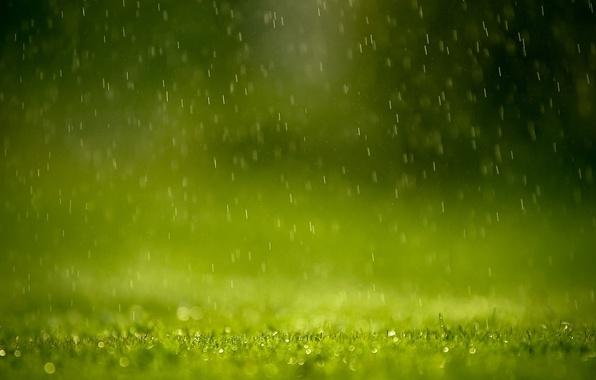 Picture greens, grass, drops, squirt, rain