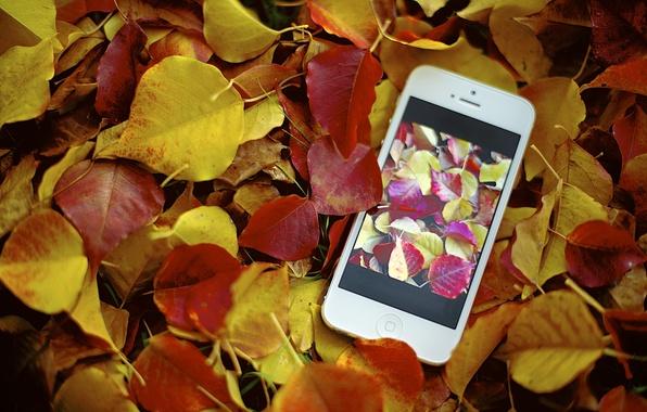 Picture autumn, photo, foliage, apple, iphone, photo, photographer, Jamie Frith
