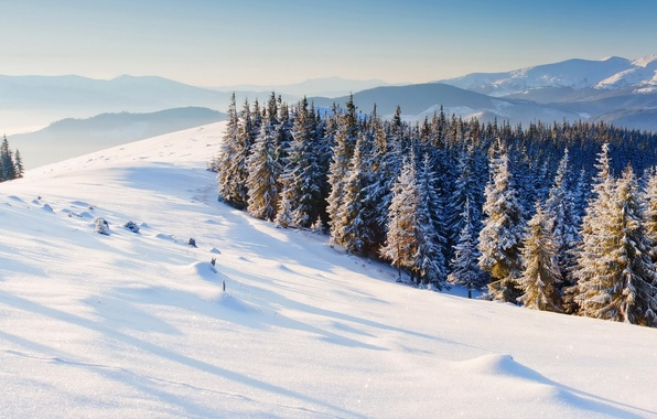Contemporary Snow Trees Background Mountains Nature Wallpaper Tree T And Decorating