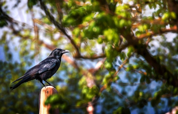 Picture leaves, branches, bird, treatment, Landing spot