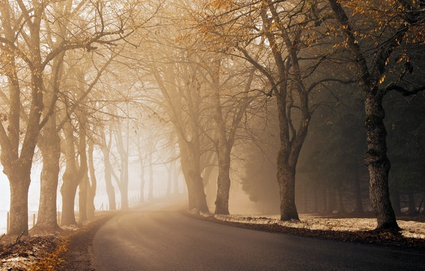 Picture road, autumn, asphalt, light, snow, trees, fog, the way, the fence, morning, roadside, haze, time …