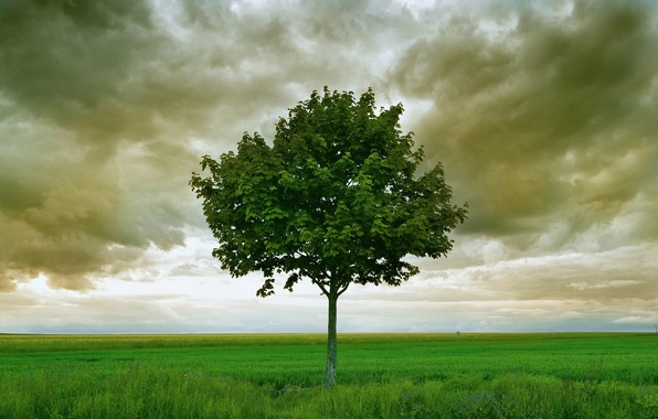 Picture field, clouds, tree, storm, horizon