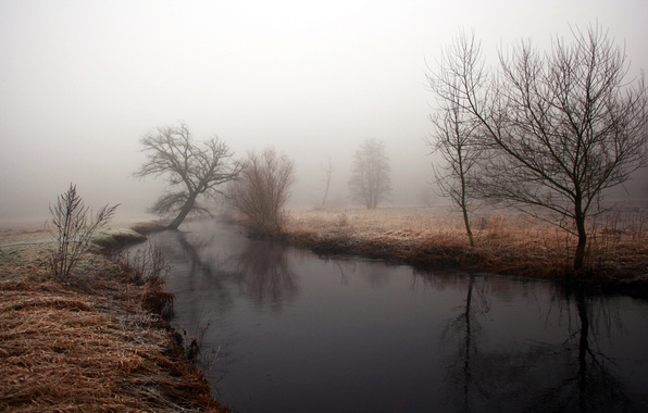 Picture autumn, water, trees, fog, reflection, river, Bank, dampness, time, gloomy morning