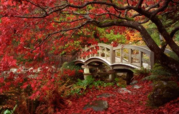Picture autumn, leaves, Japan, garden