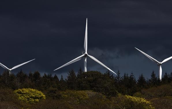 Picture landscape, night, windmills