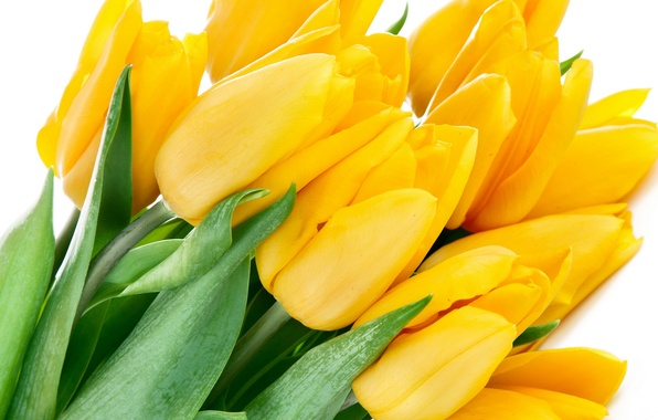 Picture leaves, flowers, bright, beauty, bouquet, petals, tulips, yellow, yellow, flowers, beauty, petals, bouquet, bright, Tulips