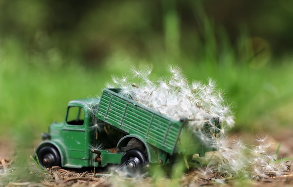 Picture nature, toy, truck, dandelions