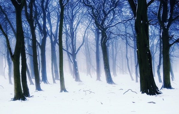 Picture winter, forest, snow, trees, branches, nature, fog