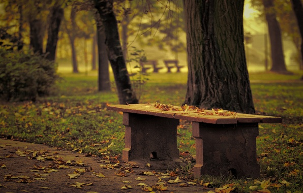 Picture autumn, trees, Park, focus, blur, effect, bench, fallen leaves
