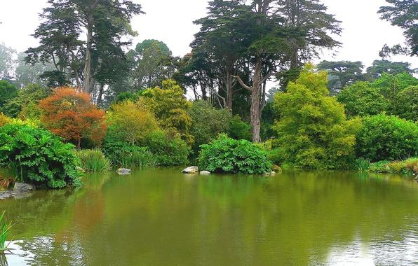 Wallpaper Trees Pond Park San Francisco Botanical Garden Botanical Garden Golden Gate Park